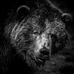 Martin Cregg - Advanced Level - Open - Black and White Brown Bear