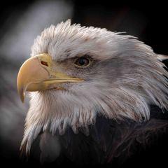Reelfoot-Lake-Eagle-Eye