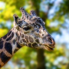 Al-Wood_Nashville-Zoo