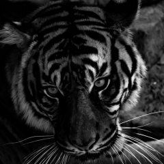 Marjorie.Pess-Nashville.Zoo_-1