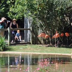 Phyllis-Tatum-Zoo-outing