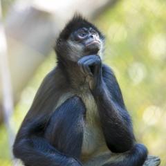 Vince-Peschio-Nashville-Zoo