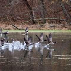 Kevin-Graham-Radnor-Lake-1