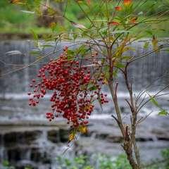 Ed-Batsel-Falls-Mill-Outing