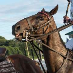Betty-Cowart-Polo-match-at-Harlinsdale-Farm-Outing