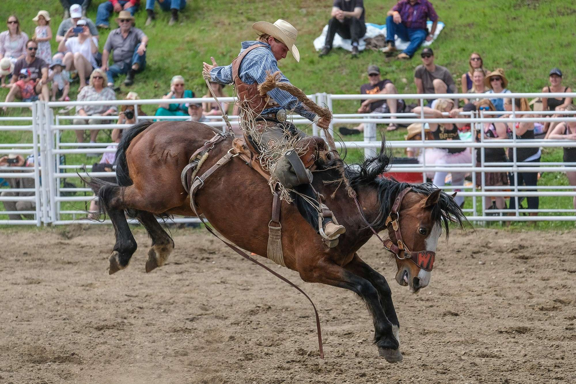 Action - Rodeo