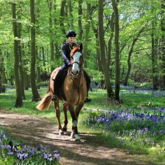 Essex Club - 46 RIding through the Bluebell Wood