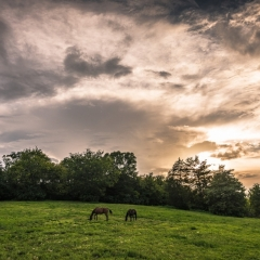 Horse Farm Scene