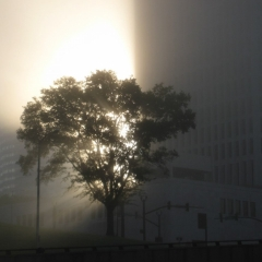 Foggy Morning in Nashville.