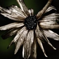 phyllis-tatum-forgottenobjects-2
