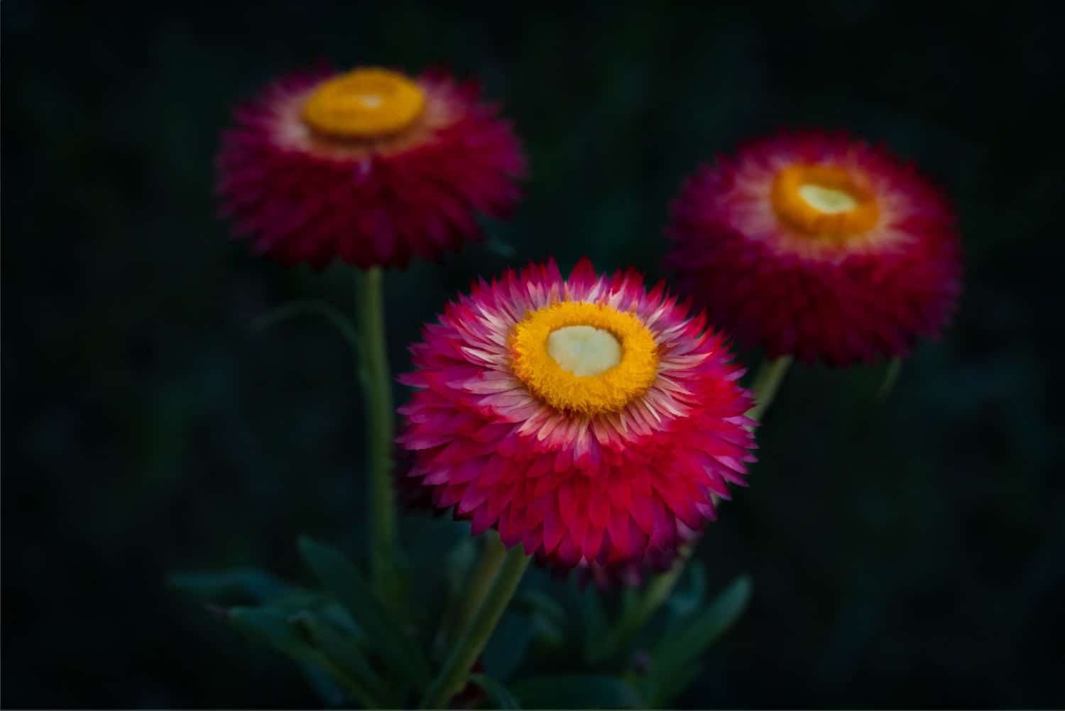 Flowers-Backyard-6-4-18-6-Edit-Edit-Edit