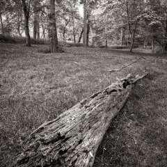 Al-Wood-Depth-of-Field-2