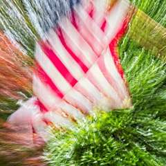 Movement-Old-Glory_R731880