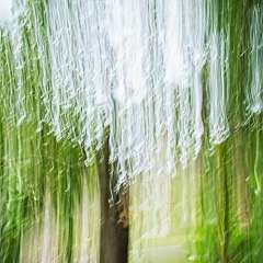 Movement-Trees-2_R731894