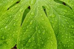 Weekly Challenge - Water Droplets