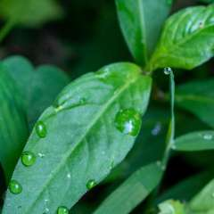 Al-Wood-Water-Drops-2