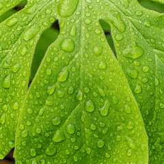 Gale-Stoner-Water-Drops-1