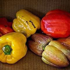 12th-St-South-Peppers-In-A-Box_R732959