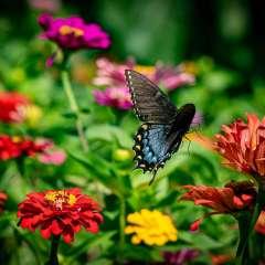Fly-Away-Butterfly