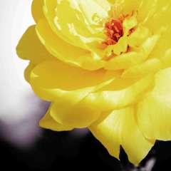 Phyllis-Tatum-Weekly-Challenge.Yellow.3