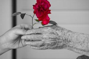 Black and white of a youmg girl's hand with a red rose handing it to an older lady's hand.
