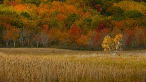 Acadia Fall 2