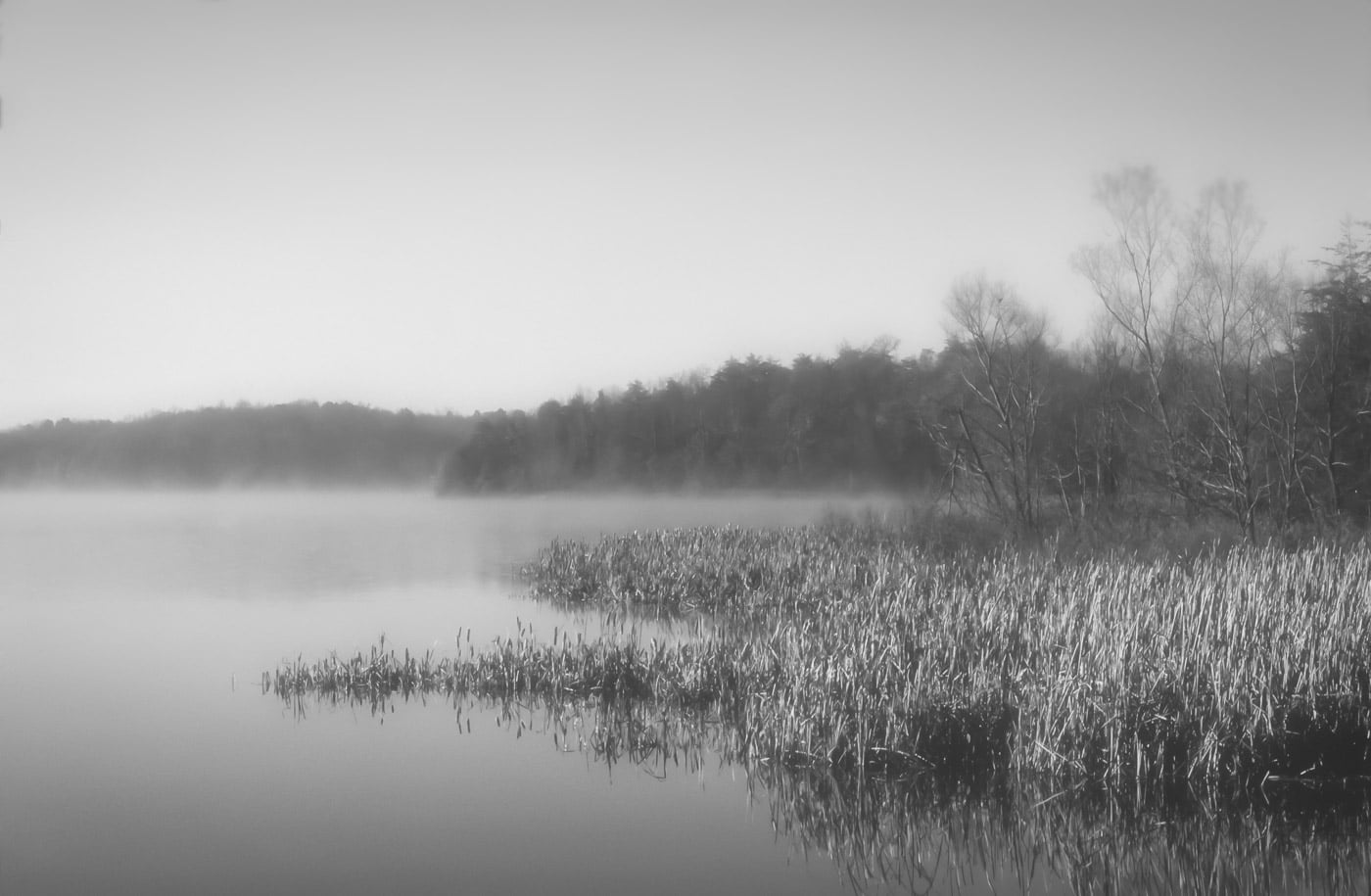 Radnor Lake - Ed Batsel-