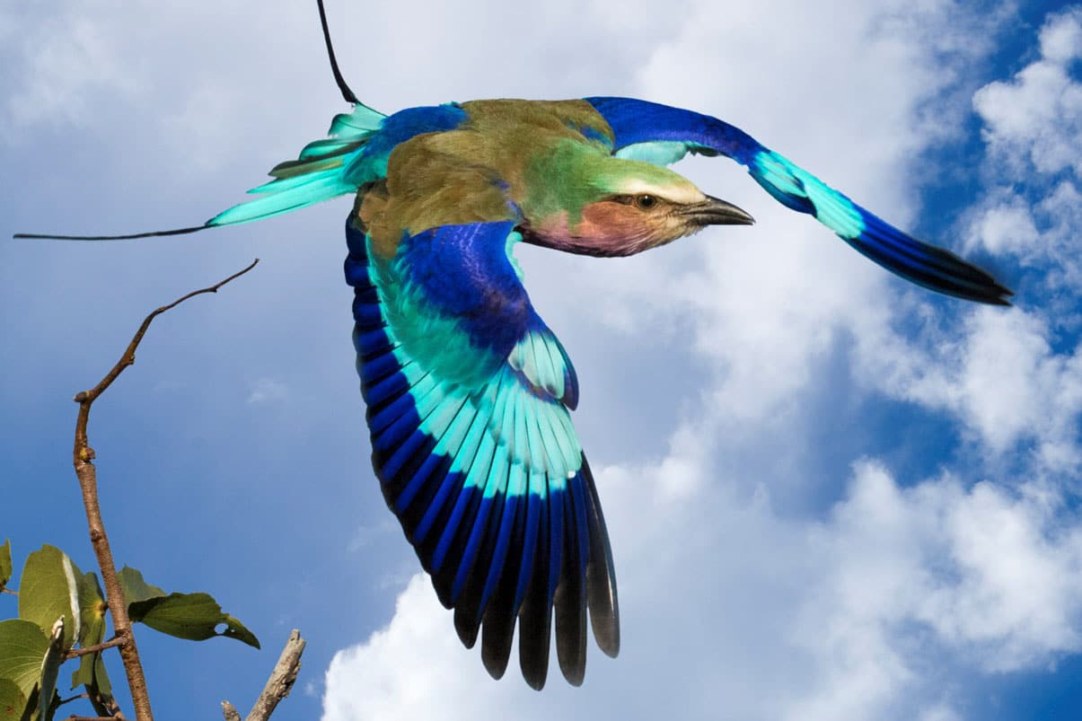 zuckerman - bird 1a