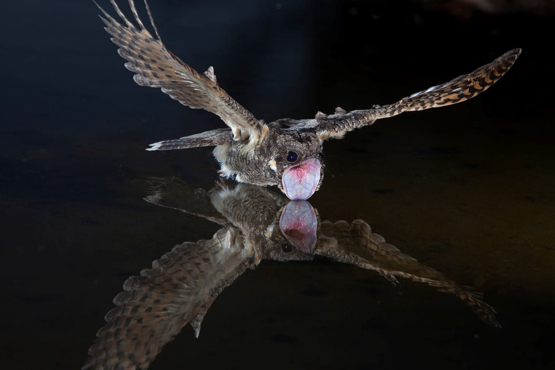 zuckerman - bird 3